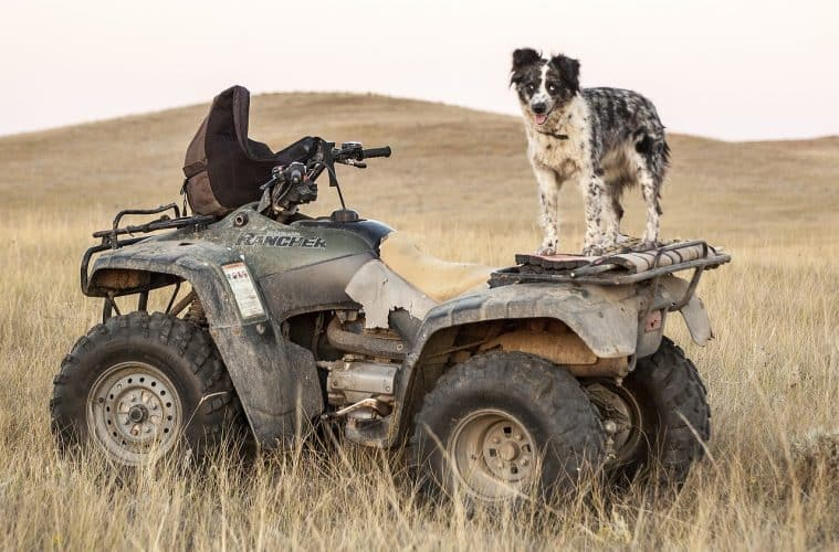 Dog sitting on an ATV at a farm